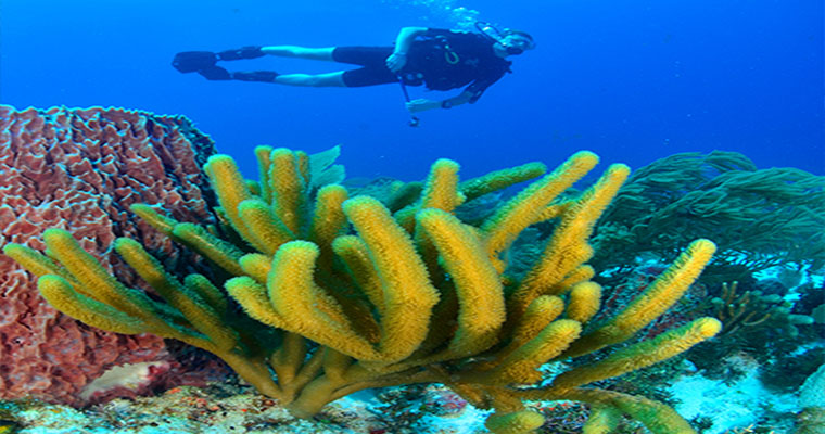 Snorkel in Cozumel with Scuba Cancun