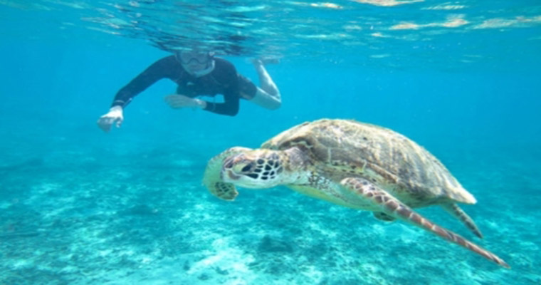 Private Tulum & Akumal Snorkel with Sea Turtles