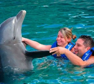 Couples Dreams - Dolphin Swim in Cancun Aquarium