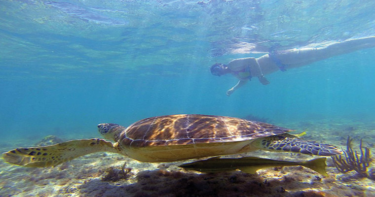 Akumal Snorkel with Sea Turtles