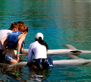 Dolphin Trainer for a day at Xelha